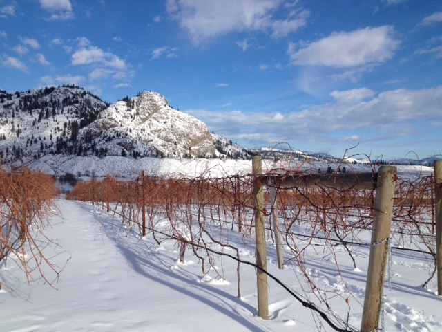 monte-creek-ranchwinter-pruning